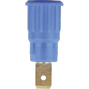 Presa jack di sicurezza Socket, built-in Blue 1 pc(s)