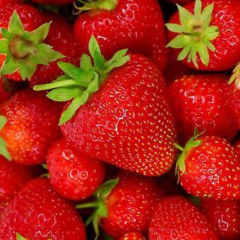 Kaffee Servietten Erdbeere 40-Pack
