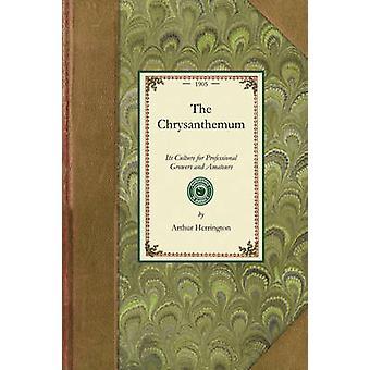 The Chrysanthemum by Herrington & Arthur