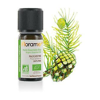Scots pine essential oil 10 ml of essential oil