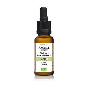 ORGANIC gorse 20 ml of floral elixir