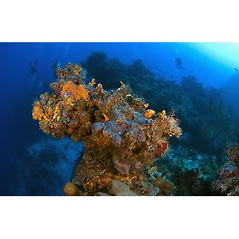 Corals And Sponges Cozumel Mexico PosterPrint