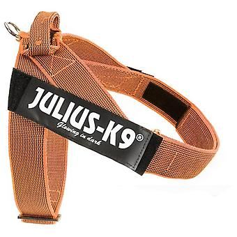 Julius K9 Arnes IDC Cinta Color & Gray (Dogs , Collars, Leads and Harnesses , Harnesses)