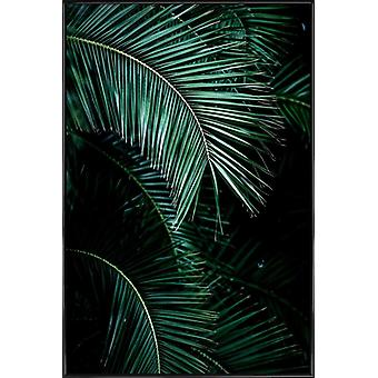 JUNIQE Print - Palm Leaves 9 - Palm Trees Poster in Green & Black