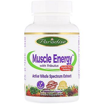 Paradise Herbs, Muscle Energy avec Tribulus, 60 capsules végétariennes