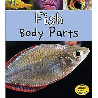 Vis Plaatwerk koetswerk (dierlijke lichaamsdelen)