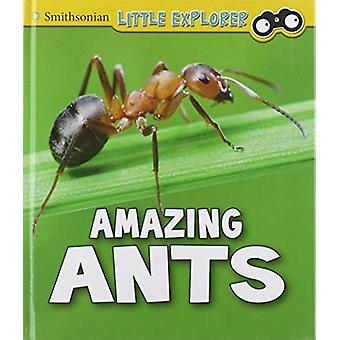 Insect Explorer Pack A of 6 by Megan Cooley Peterson - 9781474770682