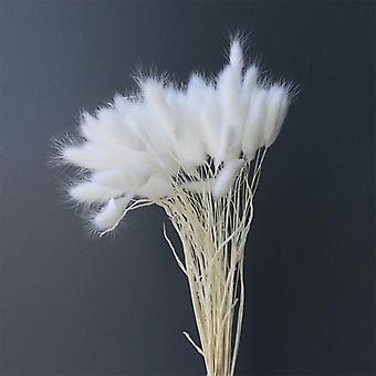 Rabbit Tail Grass Natural Dried Flowers For Wedding, Home Easter Decorations,