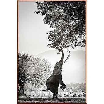 JUNIQE Print - Inom räckhåll - Elefantaffisch i svartvitt