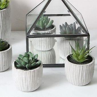 Set of 6 Succulent Plants by Gisela Graham
