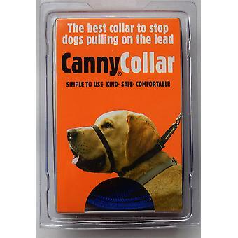 Canny Collar - Taille 4 - Bleu