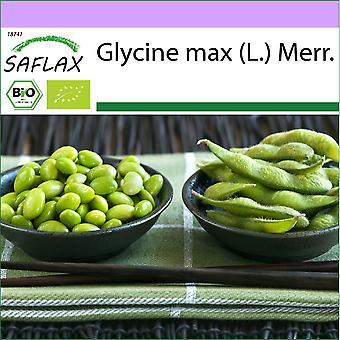 Saflax - 8 Samen - Bio - Bean - Edamame - BIO - Haricot - Edamame - BIO - Soia - fagioli Edamame - Ecol'gico - Alubia - Edamame - BIO - Bohne - Edamame