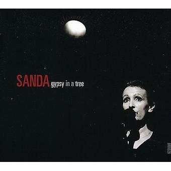 Sanda Weigl - Gypsy in a Tree [CD] USA import