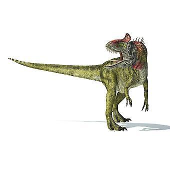 Cryolophosaurus Dinosaurier auf weißem Hintergrund mit Schlagschatten Poster Print