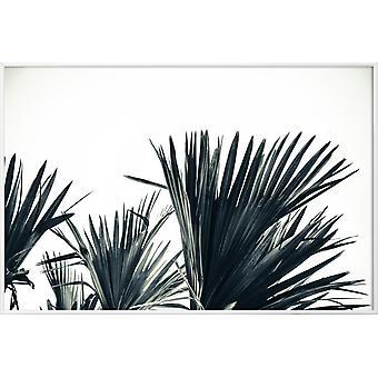 JUNIQE Print - Palm Shade 3 - Plakat Leaves & Plants w kolorze szarym & czarnym