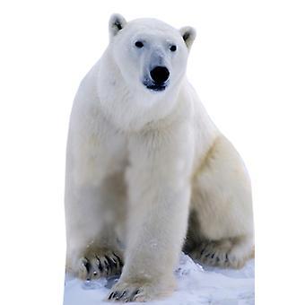 Polar Bear - Lifesize karton gestanst / Standee