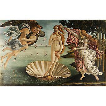 O Nascimento de Vênus, Sandro Botticelli, 60x38cm