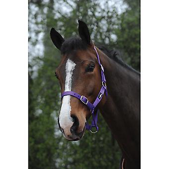 Saxon Economy Headcollar - Purple