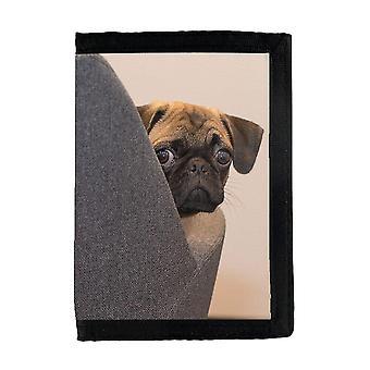 כלב בכיס