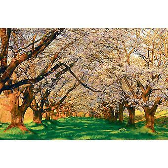 Taustakuva seinämaalaus hedelmätarha kirsikkapuita (400x260 cm)
