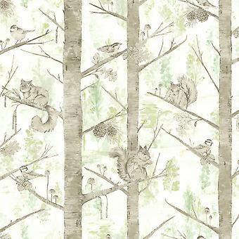 Fonds d'écran Squirrel Trees Holden
