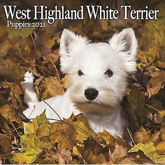 West Highland White Terrier Puppies Mini Square Wall Calendar 2021