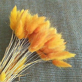 60/100 kpl kuivattuja luonnollisia kukkakimppuja, real rabbit tail ruoho lagurus