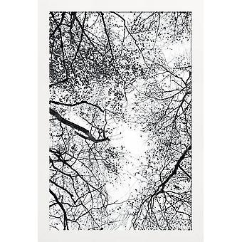 JUNIQE Print - Nå ind i himlen - Træer Plakat i grå &sort