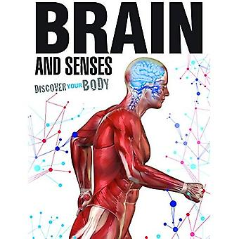 Brain and Senses (Discover Your Body)