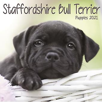 Staffordshire Bull Terrier Puppies Mini Square Wall Calendar 2021