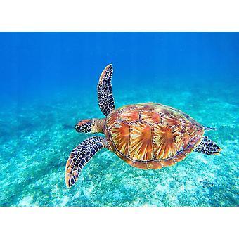 Tapet vægmaleri stor Grøn havskildpadde