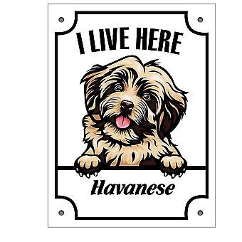 Sinal de lata Havanese Kikande sinal de cachorro