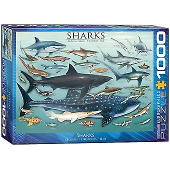Eurographics Sharks Jigsaw Puzzle (1000 Pieces)