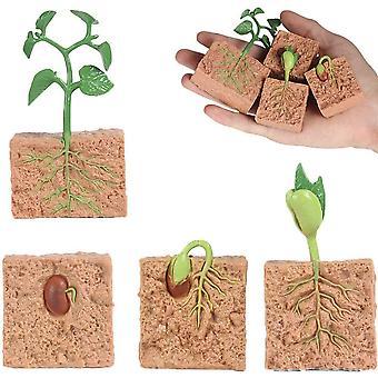 Kit modèle de croissance des plantes vertes Jouets éducatifs pour l'apprentissage des enfants