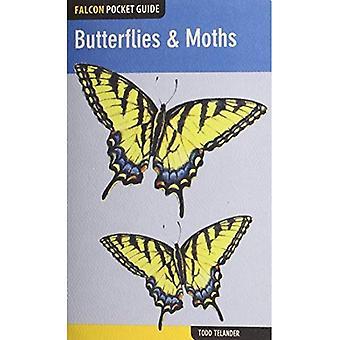 Guide de poche de Falcon: Papillons & papillons