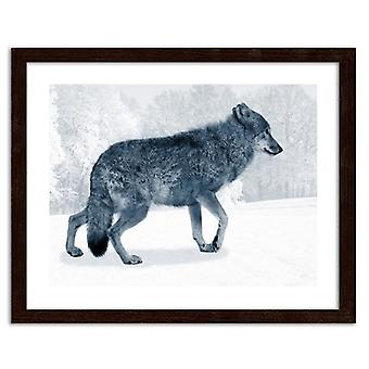 Picture In Brown Frame, Gray Wolf