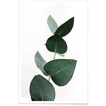 JUNIQE Print - Eucalyptus 4 - Leaves & Plants Poster in Green