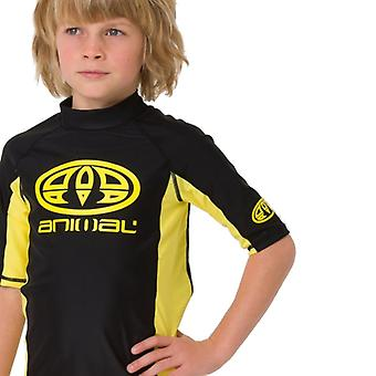 Animal Kids Hiltern Short Sleeve Rash Top | Black
