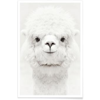 JUNIQE Print -  Smiling Alpaca - Wildtiere Poster in Weiß