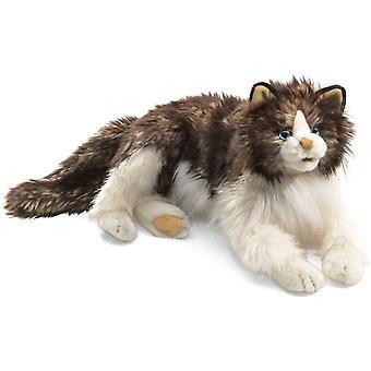 2558 - wuschelige Katze