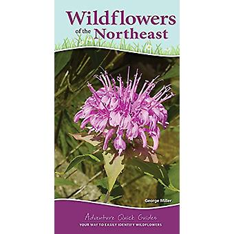 Wildflowers of the Northeast - Your Way to Easily Identify Wildflowers
