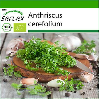 Saflax - 800 seeds - With soil - Organic - Chervil - BIO - Cerfeuil commun - BIO - Cerfoglio - Ecológico - Perifollo - BIO - Kerbel