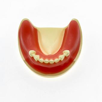 Zahnmodell Zahnimplantatmodell für Denschnitt