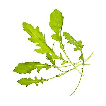 TREGREN Seed Pods Ruccola Two pcs