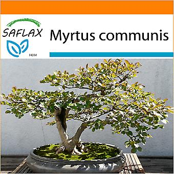 Saflax - Garden in the Bag - 30 seeds - Bonsai - True Myrtle - Myrte commun - Mirto - Mirto - B - Echte Myrte / Brautmyrte