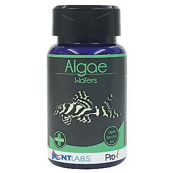 NT Labs Pro-F Algae Wafers 110g