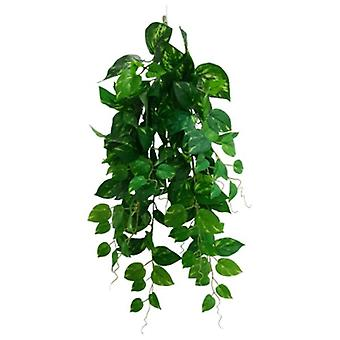 Heart Leaf Philodendron Hanging Creeper Bush 73 Cm