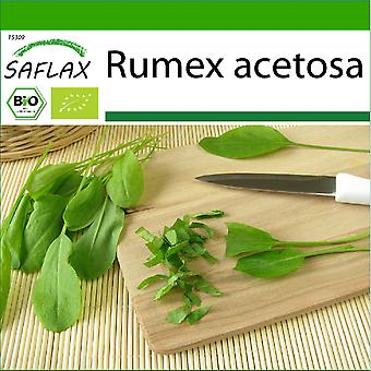 Saflax - 400 seeds - With soil - Organic - French Sorrel - BIO - Oseille commune - BIO - Acetosa - Ecológico - Alazana - BIO - Sauerampfer