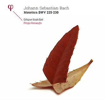 Bach / Herreweghe, Philippe / Collegium Vocale Gent - Bach: Motetten Bwv 225-230 [Vinyl] USA import