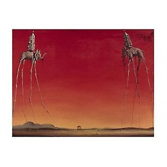 Les Elephants c1948 Poster Print by Salvador Dali (20 x 16)